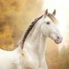 konie-moim-zyciem
