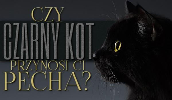 Czy czarny kot przynosi Ci pecha?