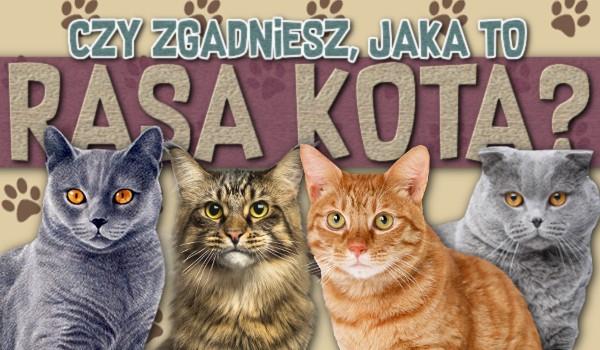 Czy zgadniesz jaka to rasa kota?