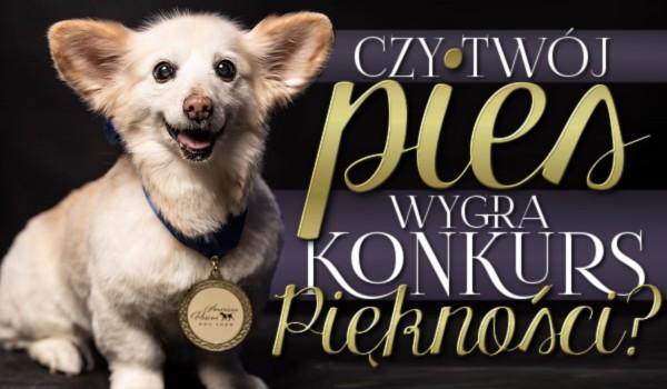Twój pies wygra konkurs piękności? Przetrwanie!