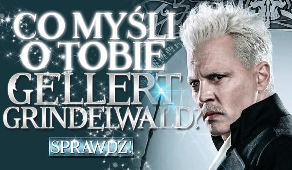 Co myśli o Tobie Gellert Grindelwald?