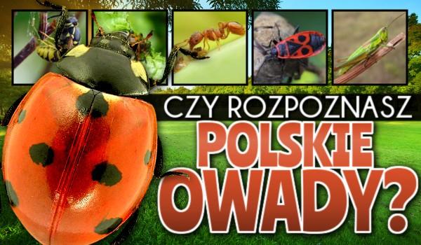 Czy rozpoznasz pospolite polskie owady?