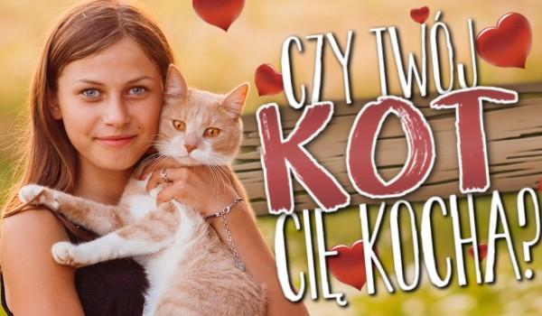 Czy Twój kot Cię kocha?