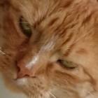 Garfieldlazania