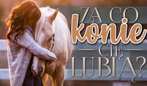 Za co konie Cię lubią?