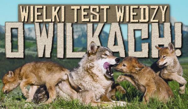Wielki test wiedzy o wilkach!