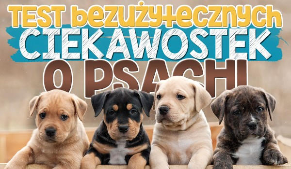 Test bezużytecznych ciekawostek o psach.