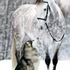 Paulina.horses