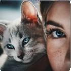 CatFansier