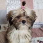 Dog_Potterheart