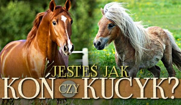 Jesteś jak koń czy kucyk?