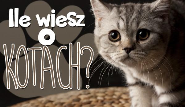 Ile wiesz o kotach?