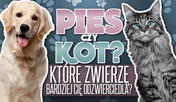 Które zwierzę bardziej Cię odzwierciedla – pies czy kot?