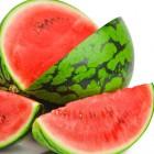 Melon210