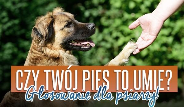 Czy Twój pies to umie? – Głosowanie dla psiarzy!