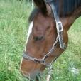 Rami-horse