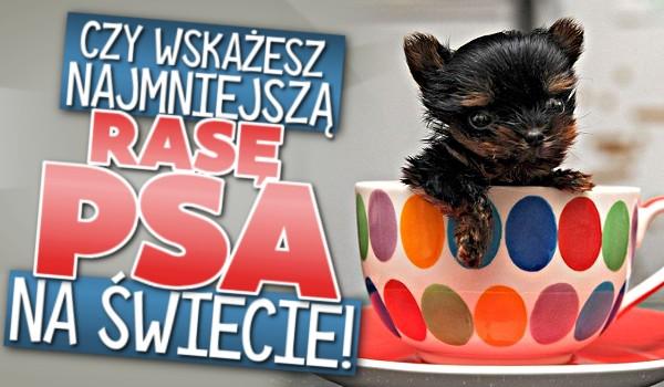 Wskaż najmniejszą rasę psa na świecie!