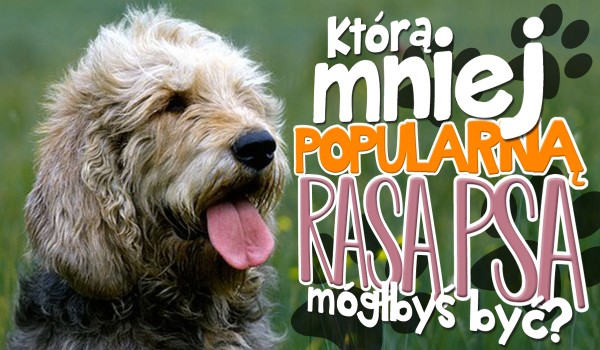 Którą mniej popularną rasą psa mógłbyś być?