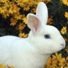 Bunny72