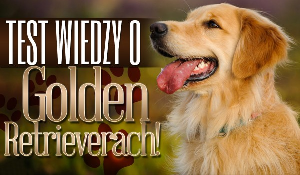 Test wiedzy o Golden Retrieverach!