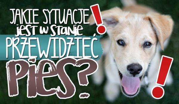 Jakie sytuacje jest w stanie przewidzieć pies?