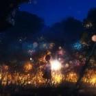 starlight17