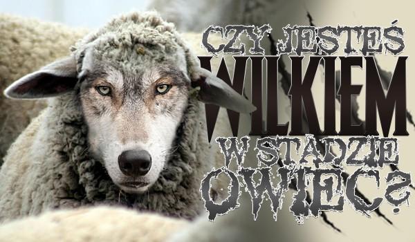 Czy jesteś wilkiem w stadzie owiec?