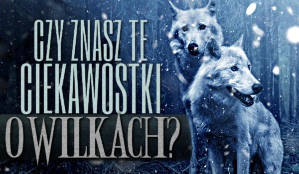 Czy znasz te ciekawostki o wilkach?