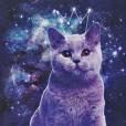 kosmiczne_koty