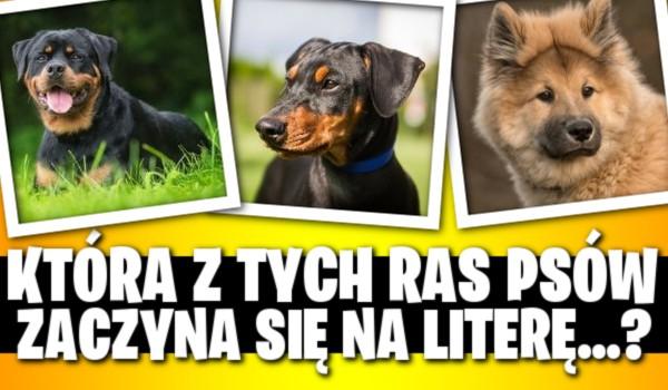 """Która z tych ras psów zaczyna się na literę… ? – Tylko """"psi-master"""" zaliczy ten quiz na 100%!"""