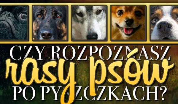 Czy rozpoznasz 14 ras psów po samych pyszczkach?