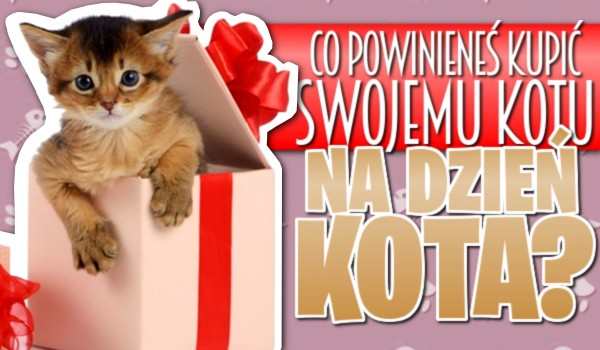 Co powinieneś kupić kotu na Dzień Kota?