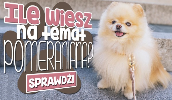 Sprawdź, ile wiesz na temat Pomeraniana!