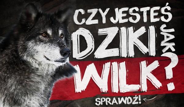 Czy jesteś dziki jak wilk?