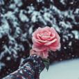 Rose12690