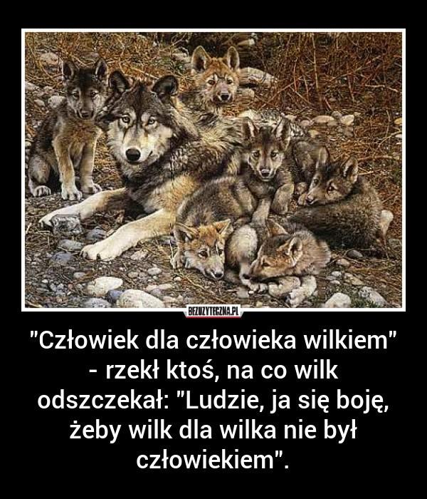 Wilk z Lenej | Zgorzelec Nasze Miasto