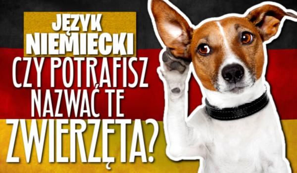 Język niemiecki – Czy potrafisz nazwać zwierzęta?