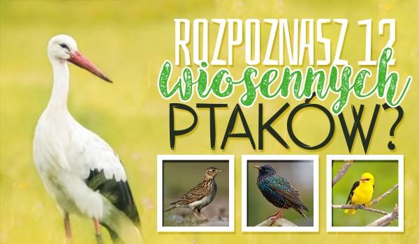 Czy rozpoznasz 12 wiosennych ptaków?