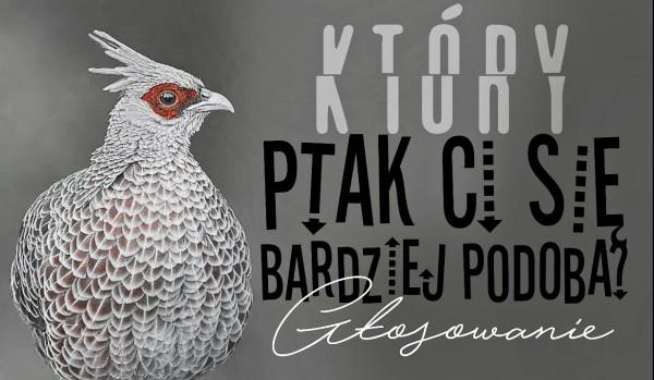 Głosowanie – Który ptak Ci się bardziej podoba?