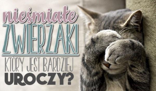 Nieśmiałe zwierzaki – który jest bardziej uroczy?