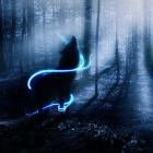 Night_wolf_12