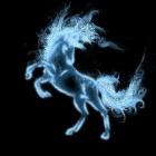 Love_Horse_Love