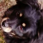 pies.czarek