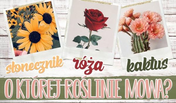 O której roślinie mowa? Słonecznik, kaktus czy róża?