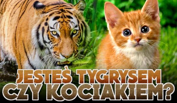 Jesteś tygrysem czy kociakiem?
