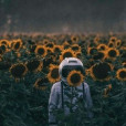 lonely_sunflower_