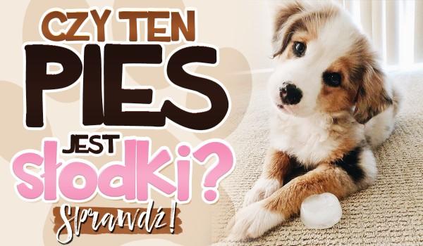 Czy ten pies jest słodki? – Głosowanie!