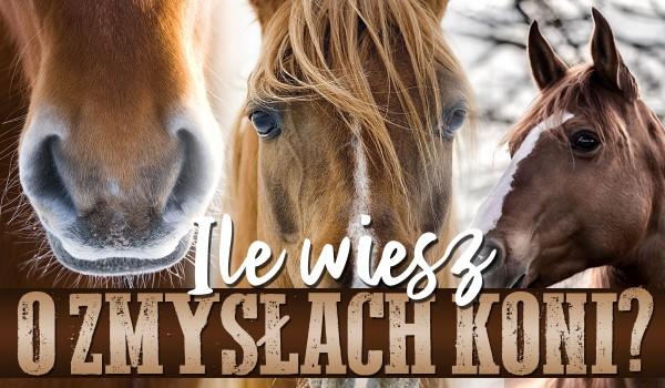 Ile wiesz o zmysłach koni?