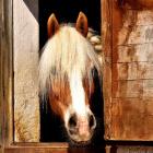 M.Horse