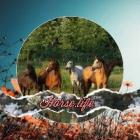 Horse.life